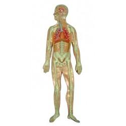 Sistemul Respirator, basorelief