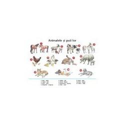 Plansa Animalele si puii lor