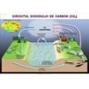 Circuitul dioxidului de carbon in natura