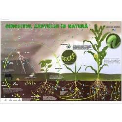 Circuitul azotului in natura