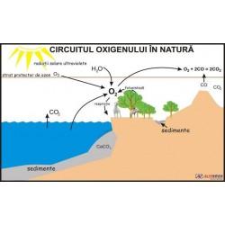 Circuitul oxigenului in natura