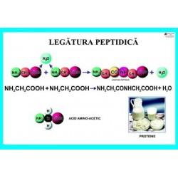 Legatura peptidica