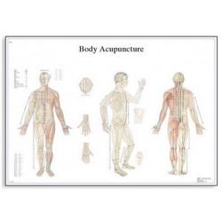 Acupunctura corpului