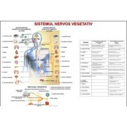 Sistemul nervos vegetativ-II