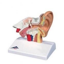 Model ureche