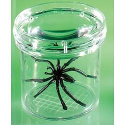 Dispozitiv pentru studierea insectelor vii