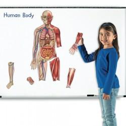 Corpul uman – set magnetic