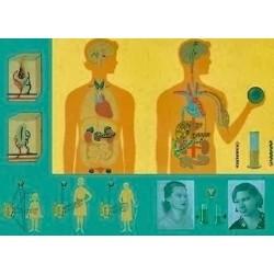 Sistemul hormonal
