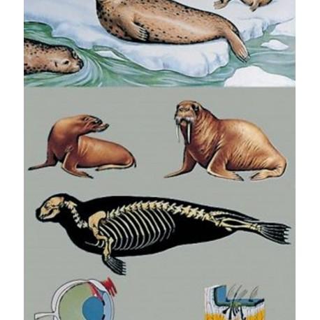 Pescarusul si zborul pasarilor